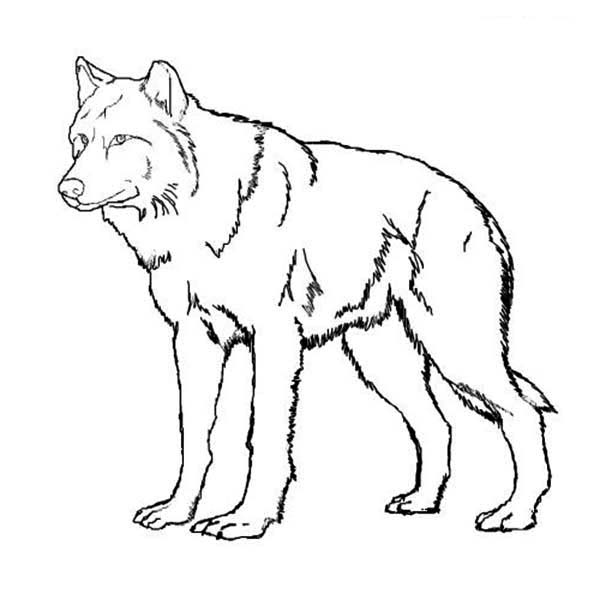 intricate wolf pup coloring pages - photo#10