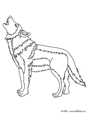angry arctic wolf coloring pages - photo#36