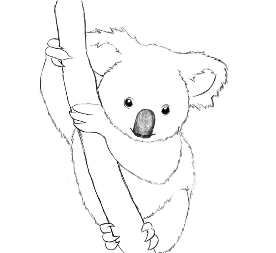 Koala coloring pages clipart best sketch coloring page for Koala coloring page