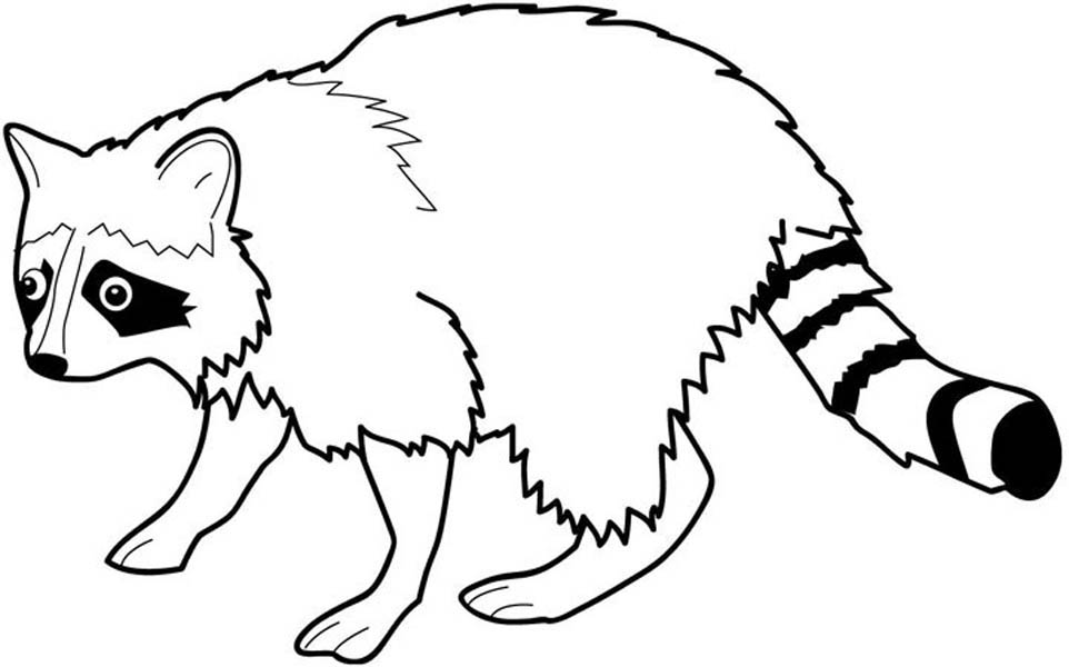 raccoon tune coloring pages - photo#21